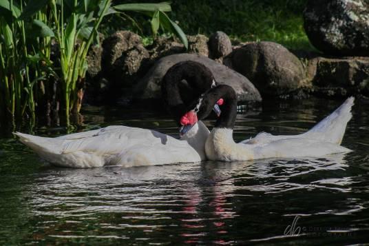 Avian-Amour_IMG_8464