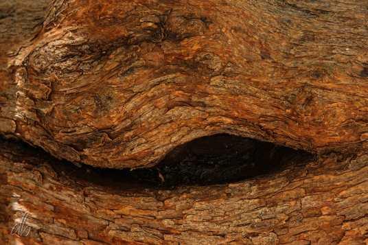 Wooden-I_IMG_0493