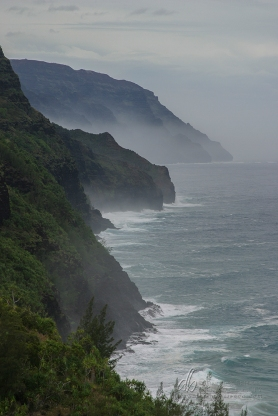 Island Mist_IMG_1951