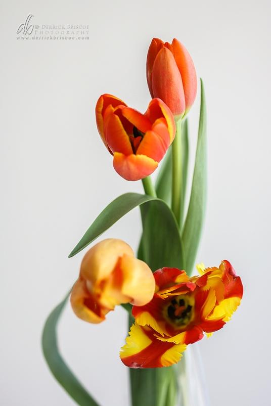 Tulips_IMG_8723