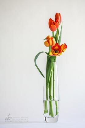 Tulips_IMG_8733