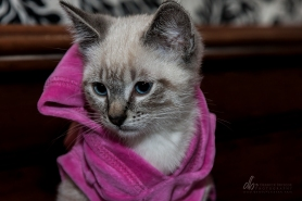 Kitten_IMG_8901